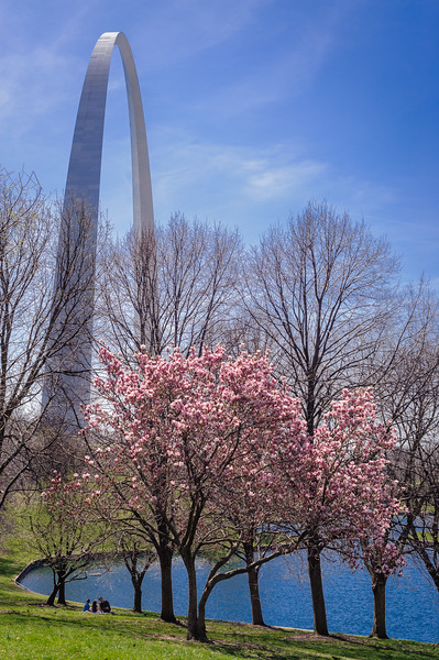 The Gateway Arch in St. Louis, Missouri in the spring with Magnolia tree