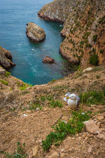 Berlenga Island  Portugal Landscape Photography 4 By Messagez com