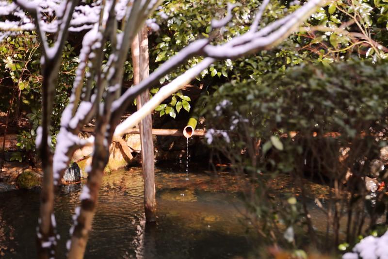 Temple garden, Kyoto