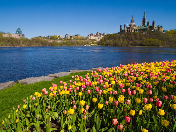 Ottawa Parliament over tulips