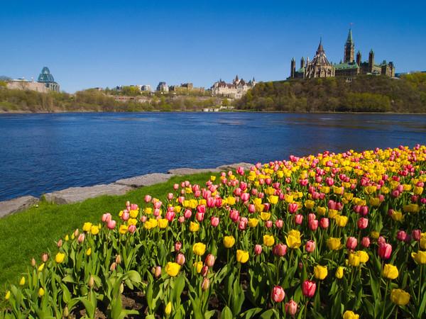 Ottawa Parliament over tulips