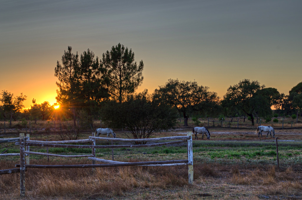 Image of Horses Wallpaper at Sunset Portugal