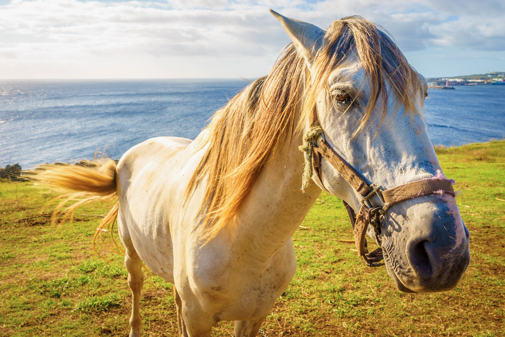 The Ocean Horse Photography 2 By Messagez com