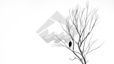 A bald eagle perched on a leafless tree in the middle of winter.