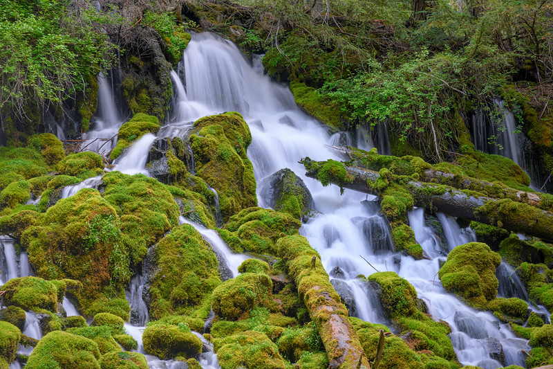 Clearwater Falls flowing over mossy green rocks and logs in the Umpqua National Forest off Highway 138, Oregon
