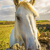 The Special Horse Photography 3 By Messagez com