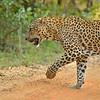 ADS_Sri Lanka_000052593