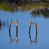 Reflections in marsh at Merritt Island National Wildlife Refuge, Titusville, Florida