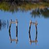 Reflections in marsh at Merritt Island National Wildlife Refuge, Titusville, Florida
