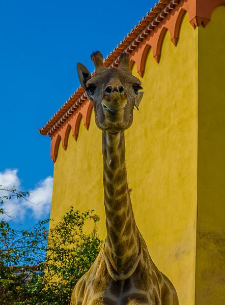 Best of Giraffe Art Photography 3 By Messagez com