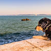 Dog Curiosity Photography By Messagez com