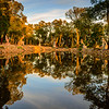 Buddha Eden Lake Reflection 2 Photography By Messagez.com