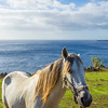 The Ocean Horse Photography By Messagez com