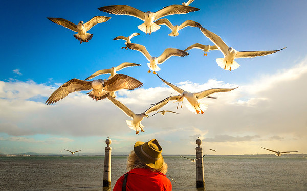 Original Lisbon Bird Whisperer Photography by Messagez com