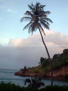 016-palm_tree-grenada-06dec02-1954