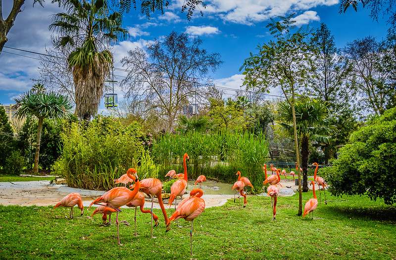 Flamingo Synchronicity Art Photography By Messagez com