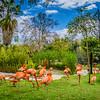 Flamingo Synchronicity Art Photography By Messagez com