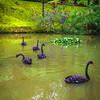Original Animal Synchronicity Photography 28 By Messagez com