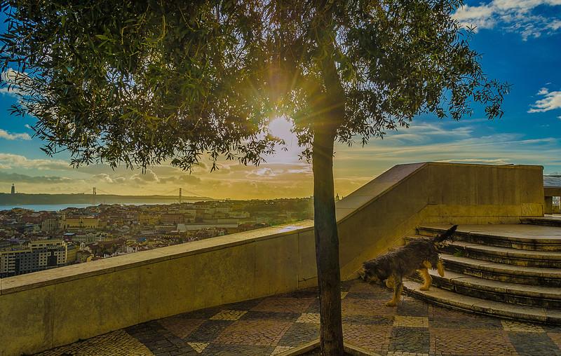 Original Portugal Lisbon Photography 9 By Messagez com
