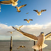 Lisbon Seagulls Synchronicity Fine Art Photography 2 By Messagez com