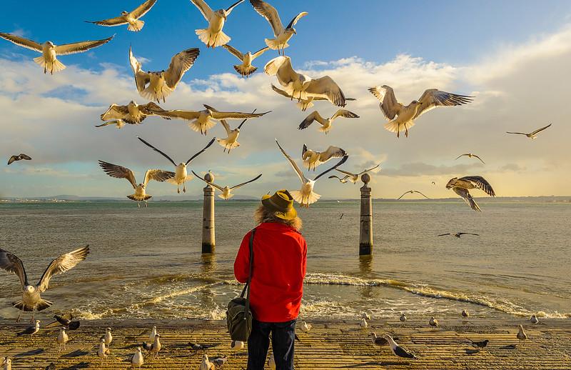 Lisbon Bird Whisperer Fine Art Photograhy 3 By Messagez com
