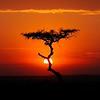 ADS_Kenya_0000021265