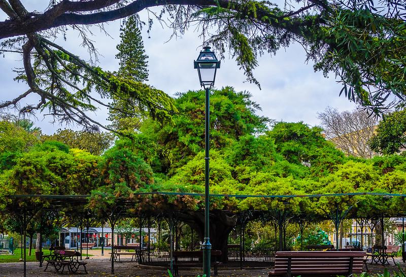 Lisbon Biggest Tree Photography By Messagez com