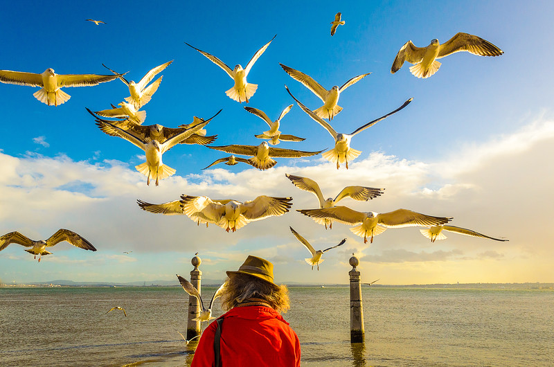 Lisbon Bird Whisperer Fine Art Photograhy By Messagez com