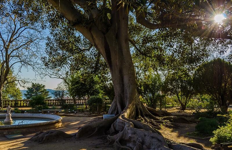 Green Lisbon Garden Photography By Messagez com