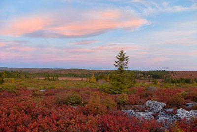Dolly Sods First Light