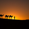 Silhouettes of camels and their handler in the desert.