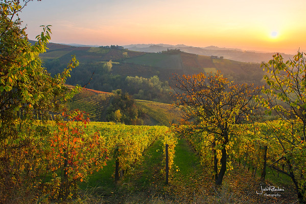 The  Langhe, Piedmont, Italy