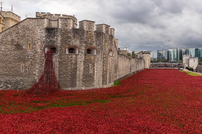 WWI Memorial Poppies
