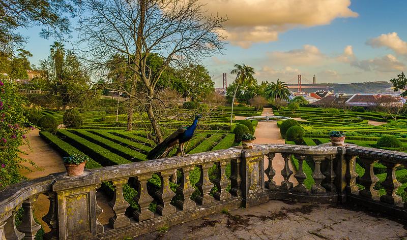 Original Peacock Fine Art Photography 15 By Messagez com