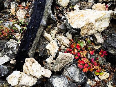 Autumn Yellowstone Matrix