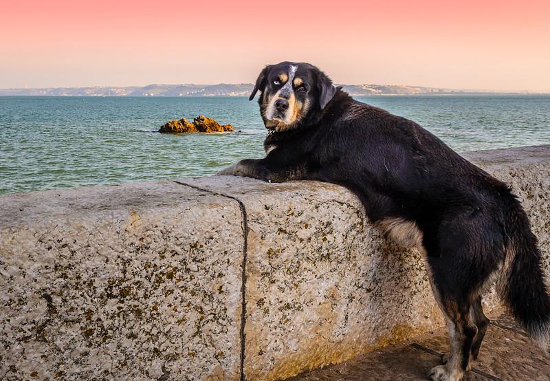 A Special Pet Connection Image By Messagez.com
