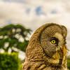 Original Animal Synchronicity Photography By Messagez com