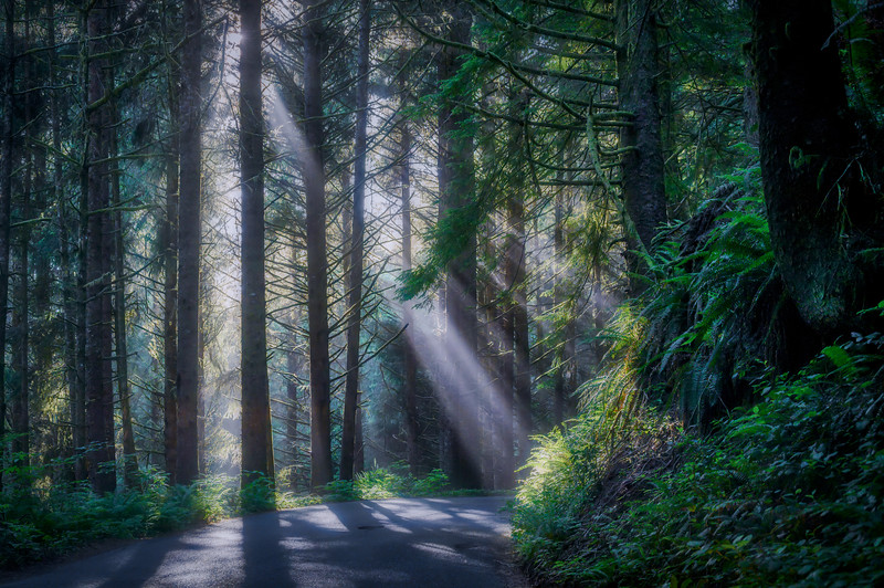 Sunlight streaming through the trees in the forest along the road at Ecola State Park, Cannon Beach, Oregon Coast