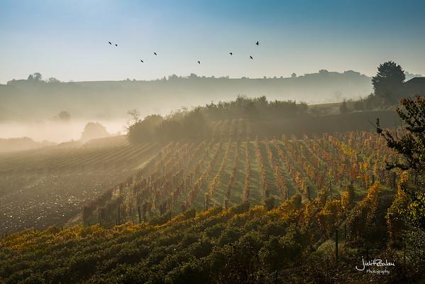 Le Langhe, Piedmont - Italy