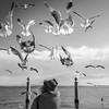 Lisbon Bird Whisperer Fine Art Photograhy 6 By Messagez com