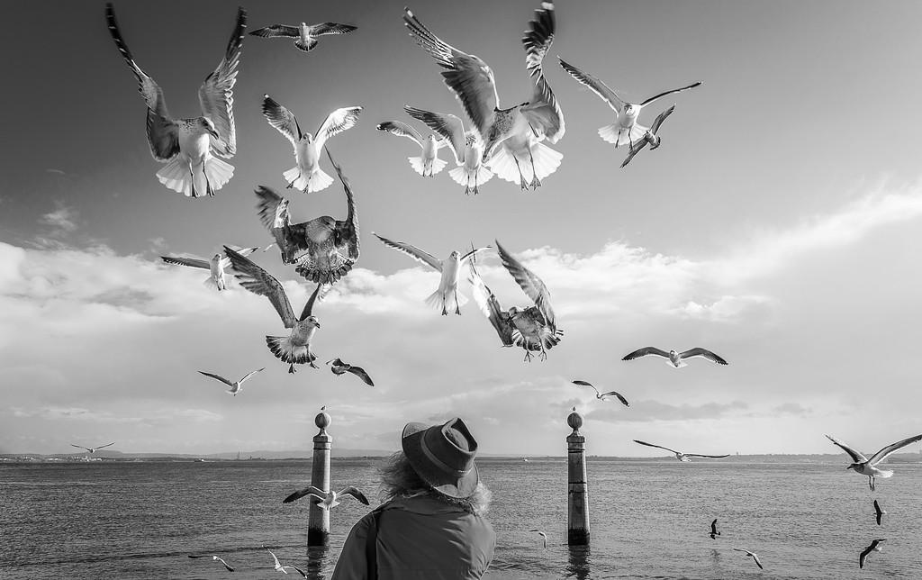 Lisbon Bird Whisperer Fine Art Photograhy 6 By Messagez com