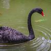 Original Animal Synchronicity Photography 26 By Messagez com