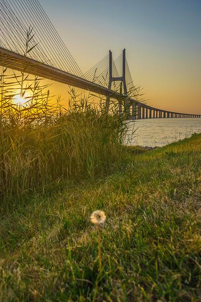 Best of Lisbon Bridge Sunrise Photography 7 By Messagez com
