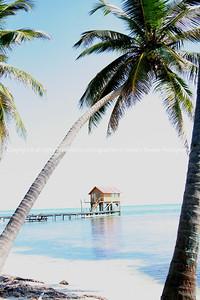 017-tropical_seascape-belize-09nov06-1592