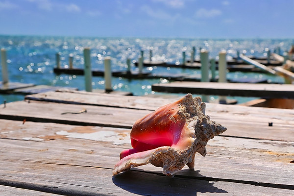 Conch Shell in Paradise