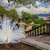 The Original White Peacock Bride Fine Art Photography 2 By Messagez com