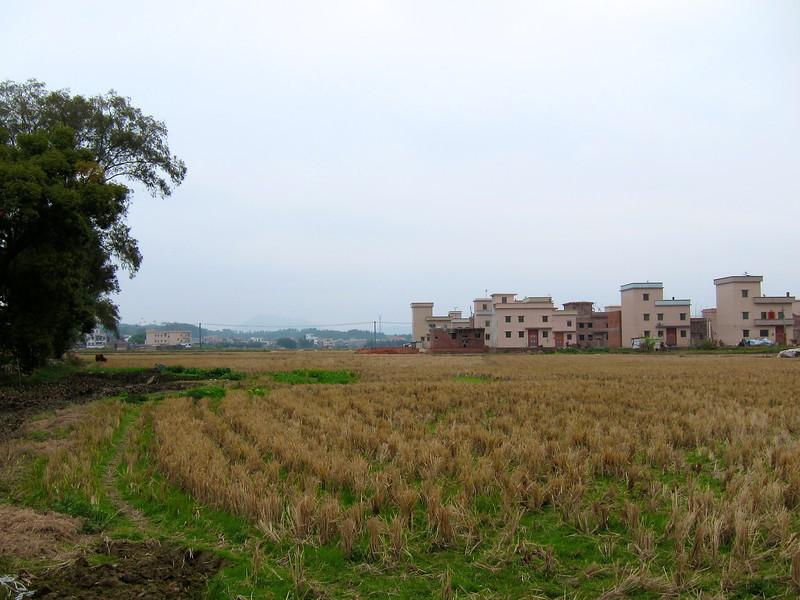 睇完屎塔睇番d 靚少少的景色。呢塊係屋附近的農田,剛收割完禾旱草。