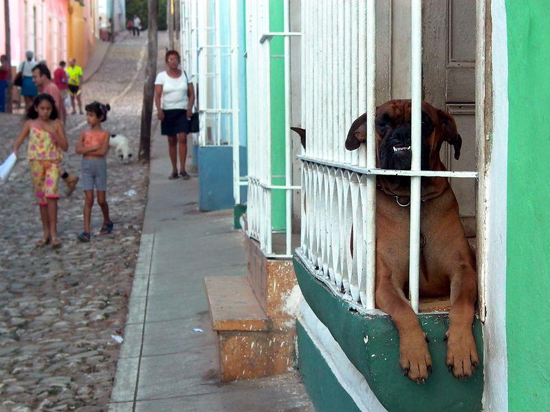 dogs & strreet