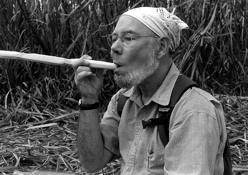 P-w-sugar-cane-near-Tr