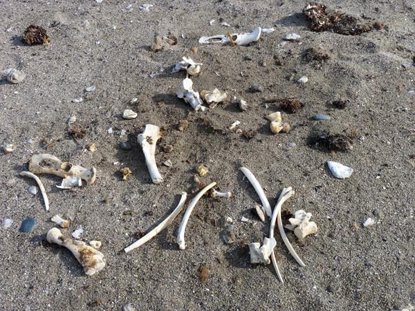 faro scattered bones P1000712